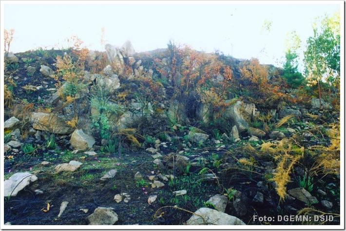 Castro Santa Margarida - Santo Tirso - www.monumentos.pt